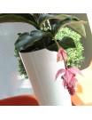 Кашпо для цветов Tubus Slim 3+2 л белый